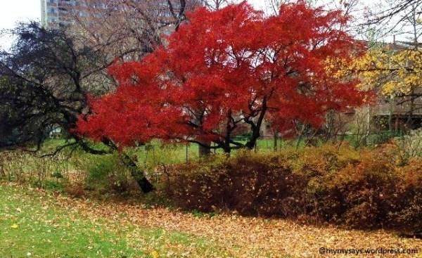 Striking beauty of one last red tree
