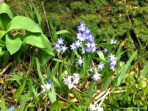 Spring (800x600)